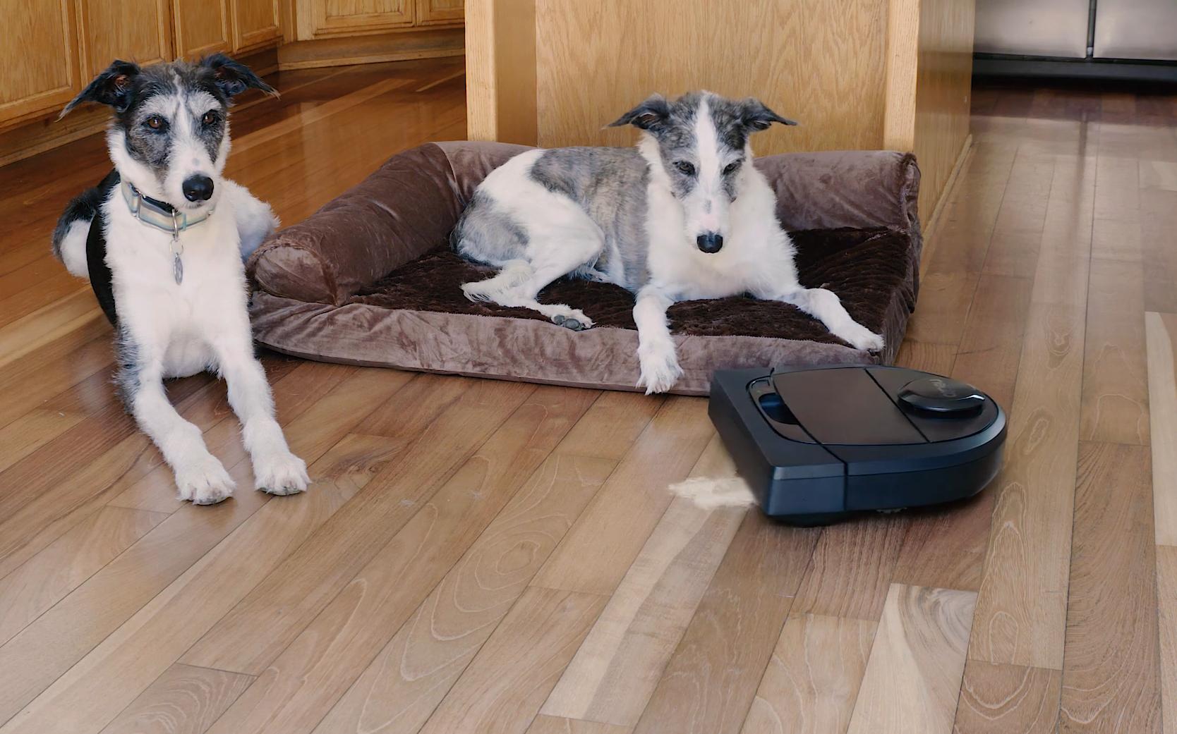 Aspirapolvere per peli di cane: la classifica dei migliori